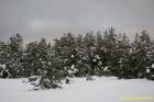 Pelēkā kāpa ziemā pavisam balta