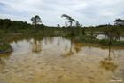Augstā purva biotops