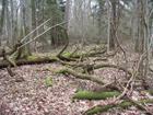 Mežs Moricsalā