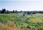 Kalnciema pļava Lielupes krastā